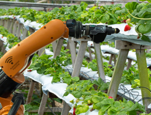 Automation in the fruit industry
